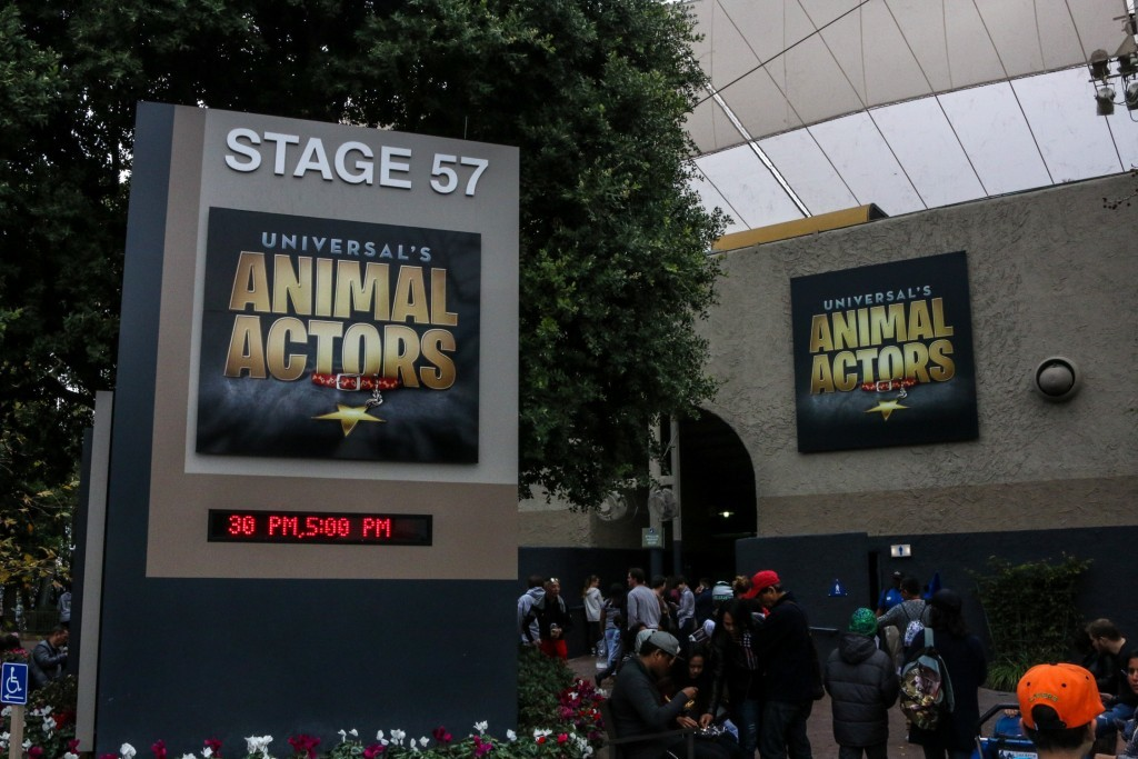 Animal Actors Exterior